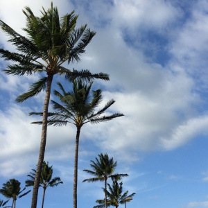 Welcoming palm trees in Maui. Oh, how I wish we were still there!